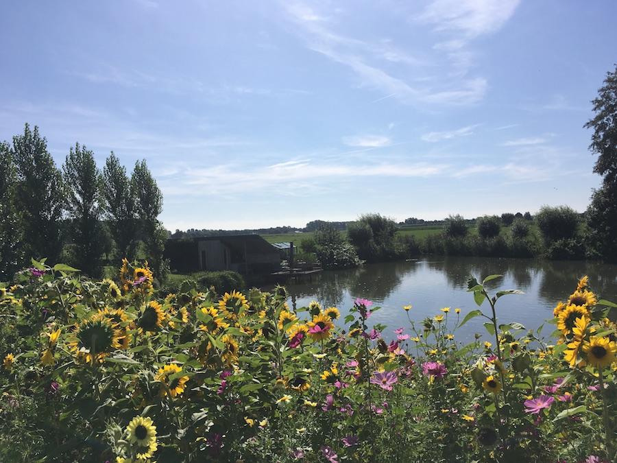 Bloemen aan een meertje nabij Zwolle