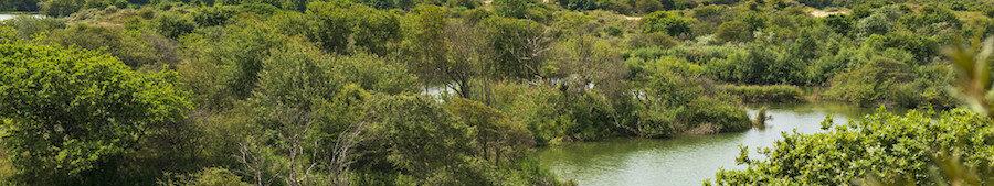 Uitzicht over bomen en water
