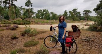 Vrouw met fiets en hond op bloeiende hei bij Soesterduinen