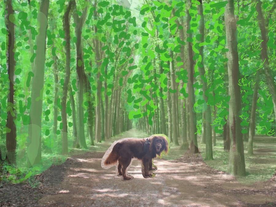 Hond in groene laan in park Nimmerdor