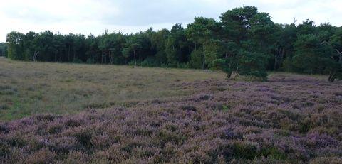 Heideveld tussen Arkmansweg en Schievenweg